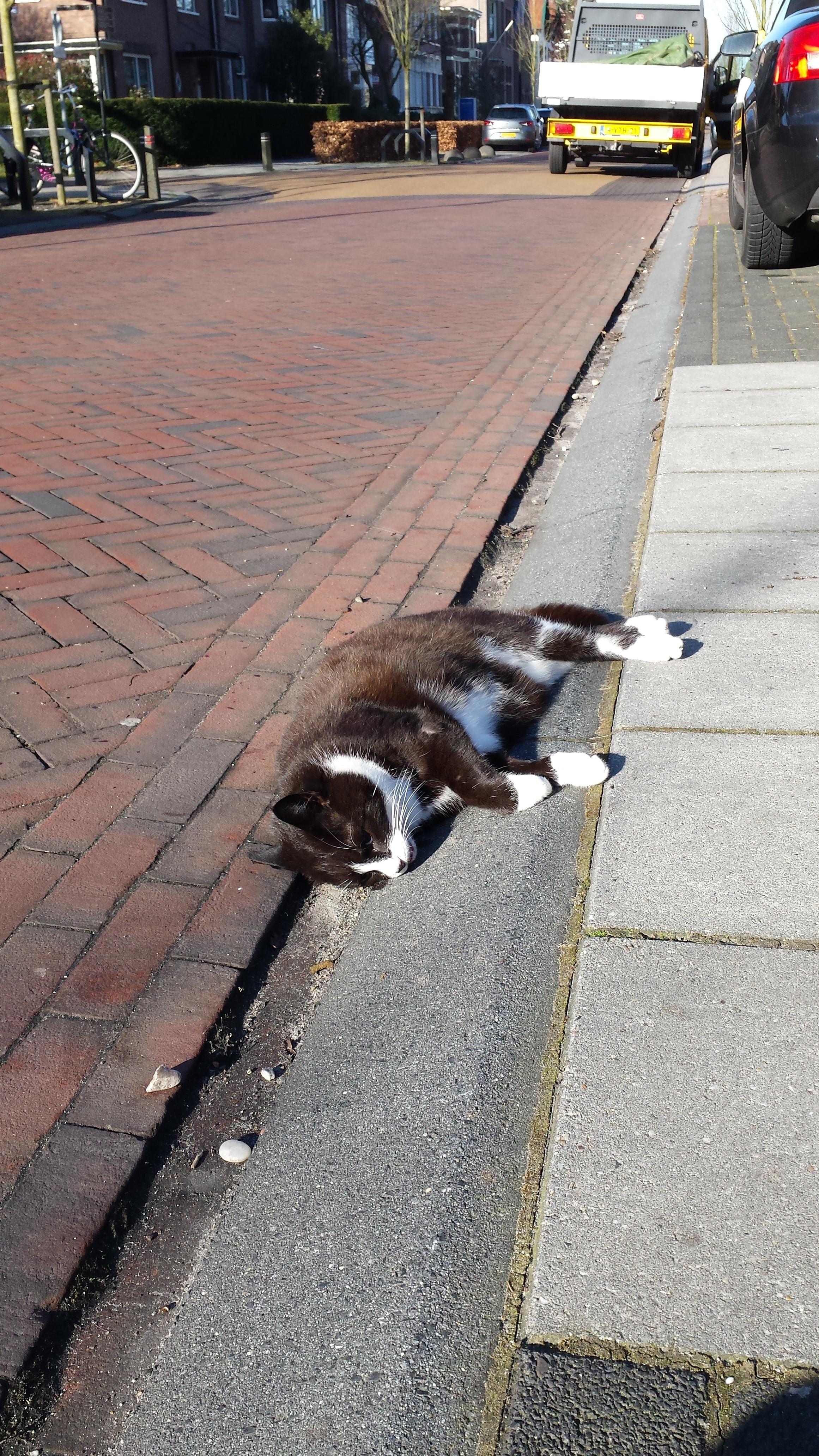 Aangereden Kat op Stationsweg Meppel