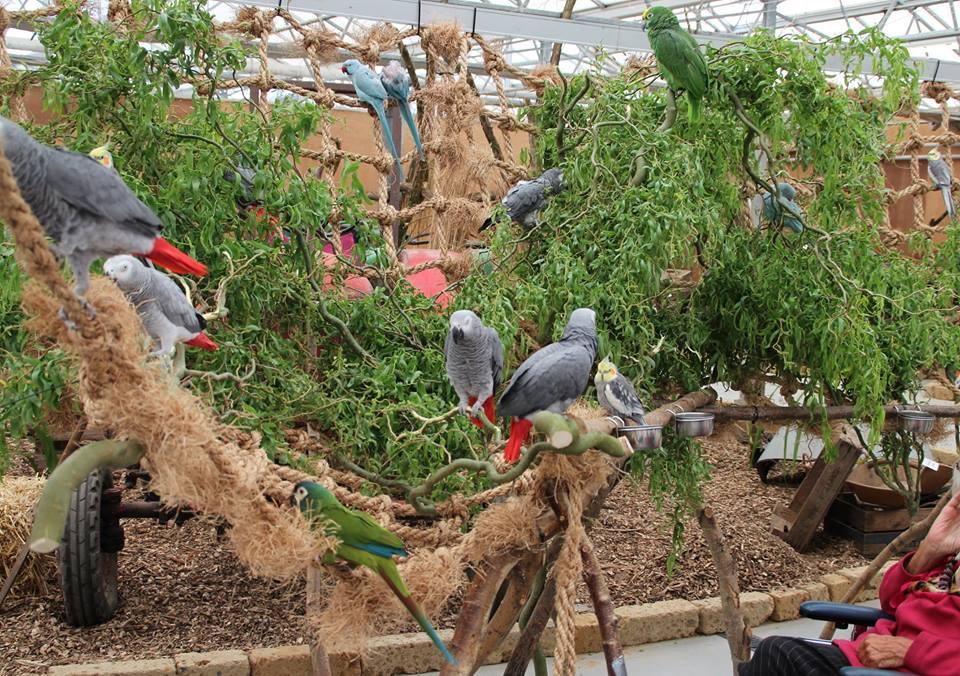 Papegaaien- en Parkietendag 2016