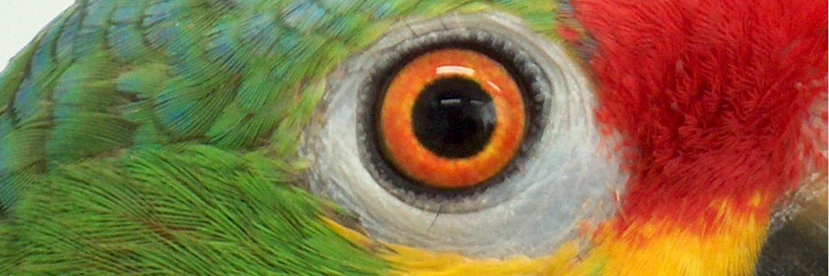 oog-amazone