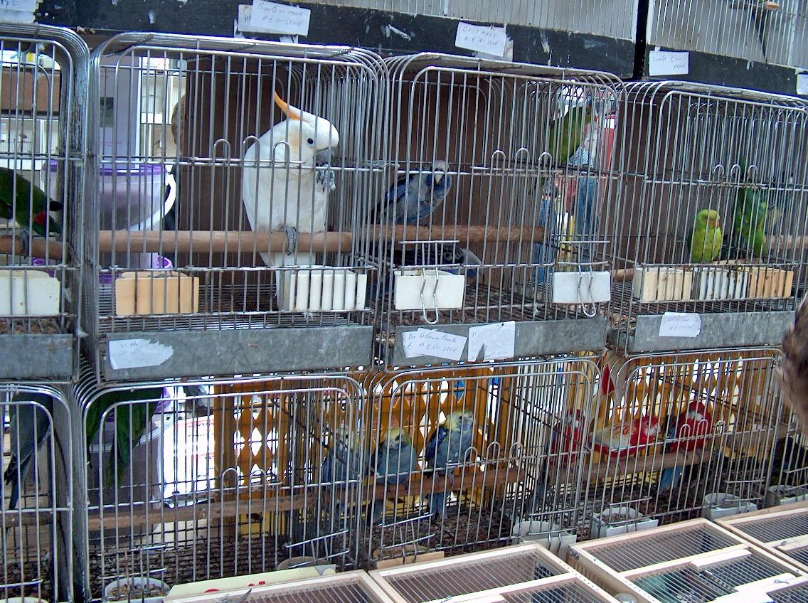 Vogelmarkten niet meer van deze tijd