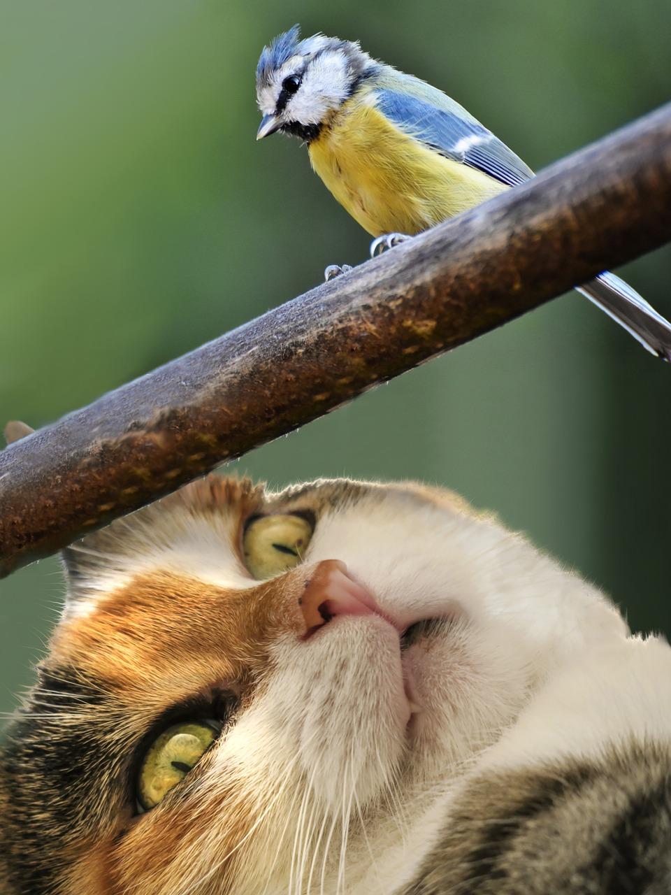 """Trouw: """"Komt uw kat buiten? Dan overtreedt hij Europese regels…"""""""